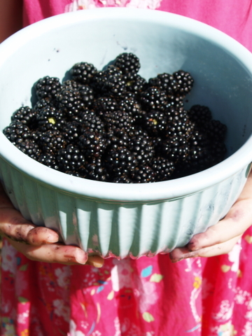 Sorcha_blackberries_2